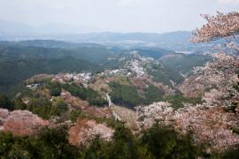 Japanin parhaat kirsikankukkanäkymät