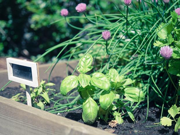 puutarhalaatikko-kesa2014-2