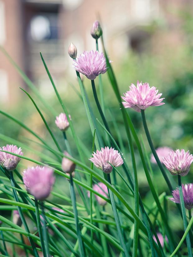 puutarhalaatikko-kesa2014-6