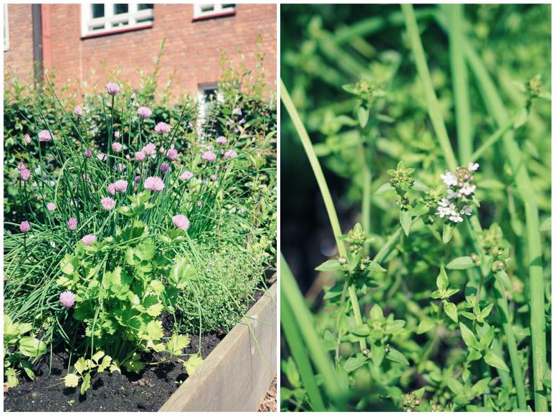puutarhalaatikko-kollaasi1